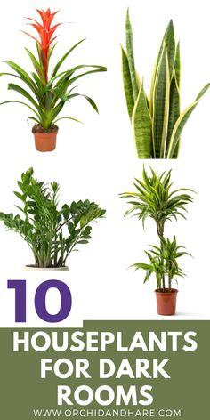 10 BEST House Plants for Dark Rooms - Find out which are the best indoor plants for low light condit Indoor Plants Low Light, Best Indoor Plants, Inside Plants, Cool Plants, Air Filtering Plants, Ficus, Peace Lily Care, Garden Cactus, Vegetable Garden