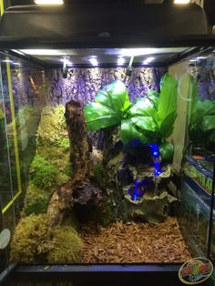 A custom naturalistic terrarium made with Zoo Med products and Repti Rapids LED Waterfall.