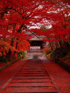 Red, my // Kyoto, Japon 毘沙門堂 Beautiful World, Beautiful Places, Japan Travel, Belle Photo, Beautiful Landscapes, Wonders Of The World, Places To Go, Nature Photography, Scenery