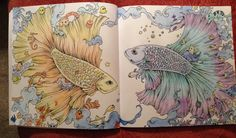 Image from Animorphia using Koh-I-Noor polycolor pencils