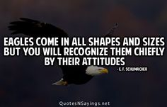 Google Image Result for http://cdn.quotesnsayings.net/wp-content/uploads/2012/06/Eagles-come-in-all-shapes-and-sizes-but-you-will-recognize.jpg