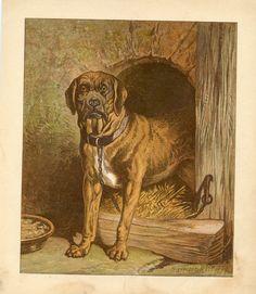 MASTIFFS EARLY MASTIFF DOG ANTIQUE PRINT 1879 HARRISON WEIR