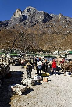 Tibetan yak caravan at the sherpa village of Khumjung, Holy Mountain Khumbi Yul…