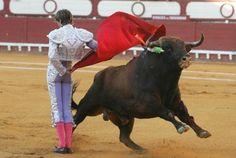 corrida de toros en espana | Corridas de toros de España — Learn Spanish DC!