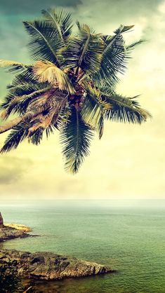 Remembering those summer days! #ios #iphone #ipad #ipod #wallpapers #walls #geek #summer #seaside #beach #palm #relax