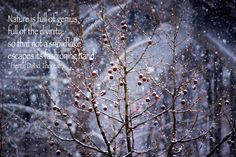 Nature, Snow, Berries, Inspiration - Original Photograph # 5067 by…