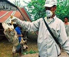 New Strain of Bird Flu Packs a Punch Even After Becoming Drug-resistant: Mount Sinai Researchers