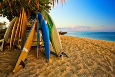 surfboards & sunshine