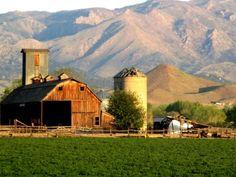 More farm