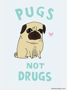 Pugs... Not Drugs