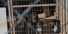 HELLENIC REPUBLIC - MINISTRY OF RURAL DEVELOPMENT & FOOD: STOP CATS AND DOGS TRADE MISSIONS IN E.U. | Please SIGN and share petition. Thanks.