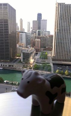 Chi-Town Cow