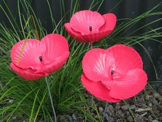 scallop shell poppies