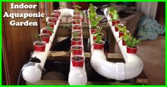 Build An Indoor Aquaponic Garden