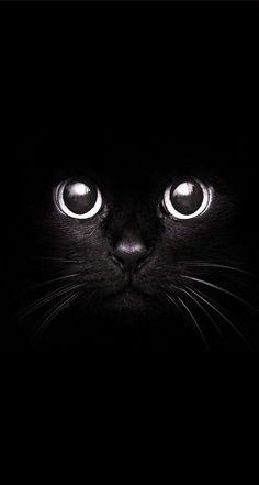 Cato preto