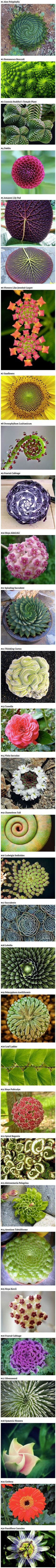 Who said math can't be interesting? Fractals like these can seem too perfect to be true, but they occur in nature and plants all the time and are examples of math, physics, and natural selection at work!