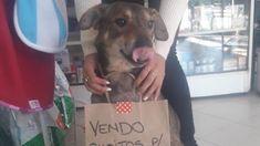 Norberto ist ein kleiner Hund, der in Argentinien auf der Straße lebt. Besonders tragisch: Er leidet an Krebs. Sein Schicksal ändert sich aber, als er die Besitzerin einer Tierklinik trifft. Sie beschließt, ihm auf eine Weise zu helfen, die Tausende von Internetnutzern berührt.