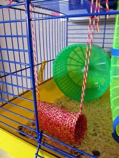 DIY: Brinquedo para o hamster / Hamster toy Gerbil Toys, Diy Hamster Toys, Hamster Life, Rat Toys, Hamster Cages, Hamster House, Guinea Pig Toys, Bird Toys, Guinea Pigs