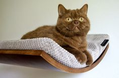 Cat accessories, cat shelves, cat furniture, pet design, cat bed, maple,walnut and wenge shade of wood, cappuccino fabric