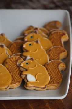Squirrel cookies recipe