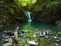 Emerald pool along jungle stream/ Corcovado National Park, Osa Peninsula/ Costa Rica/Osa Peninsula Travel Guide.