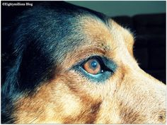 My Life With Dogs: Through Their Eyes