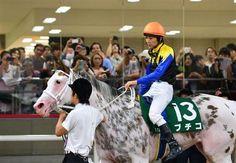 【ユニコーンS】ノンコノユメが鮮やか差し切りV(9) White Horses, Thoroughbred, Marble, Bike, Colours, Queen, Animals, Bicycle, Animales
