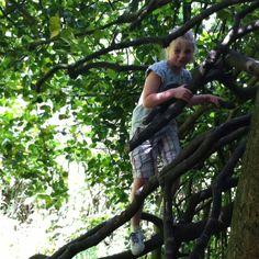 Girls climb tree's too!!