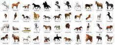 Owl Clip Art, Cowboy And Cowgirl, Horse Art, Fantastic Beasts, Background Images, Photo Art, Horses, Activities, Pets