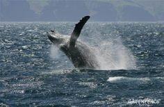 """Naciones Unidas ha reconocido que la gobernanza de los océanos significa protección, no únicamente """"gestionar la explotación"""" de los recursos marinos. Ahora hay una oportunidad de oro para fijar los estándares globales para la protección de los mares e integrar el mosaico de organizaciones que trabajan en la regulación de los recursos oceánicos.  Fuente: http://www.ecoticias.com/naturaleza/99785/la-onu-por-fin-decide-proteger-los-oceanos"""