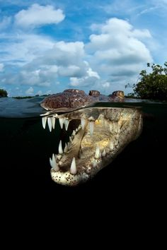 National Geographic Award Winning Pictures. Crocodile.