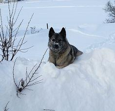 Jeg elsker snø.