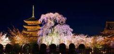 「東寺の春夏秋冬」の画像検索結果