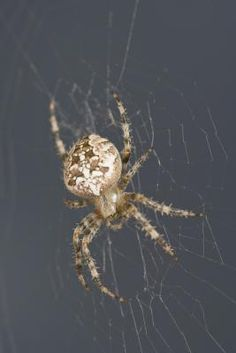 Natural Solutions to Getting Rid of Spiders
