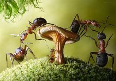 Andrei Pavlov's wonderful ant story. These ants are real, and yes, they're alive.