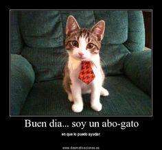 Buen dia... soy un abo-gato en que lo puedo ayudar.