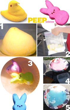 experiments to do with the kids - all with PEEPS!