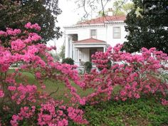 IMAGINE YOURSELF waking to the smell of magnolia and honeysuckle every morning for the rest of your life…This beautiful five bedroom, three bathroom Neoclassical Southern home built in 1918 has been…
