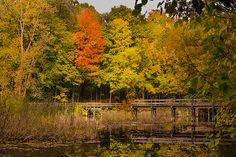 """""""Bridge To Autumn"""" by Kristina Austin Scarcelli"""