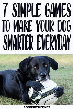 Dog Enrichment, Dog Games, Dog Activities, Cool Pets, Service Dogs, Dog Behavior, Training Your Dog, Dog Friends, Dog Life