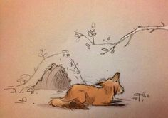 Chiara fox