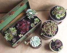DIY: Vintage Succulent Toolbox | Alana Jones-Mann