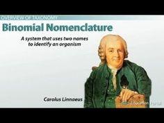 Binomial Nomenclature Branches Of Biology, Linnaeus, Memes, Meme