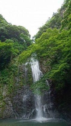 大阪 箕面の滝です 紅葉時期が有名ですが新緑時期もマイナスイオンで癒されます(-)    滝# 癒し#
