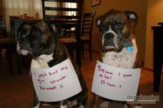 Boxer shaming :-)