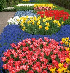 Wie gemalt: ein Frühlingsblumenmeer.