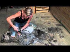 ▶ Namaste Farms Shearing Angora Goats - YouTube