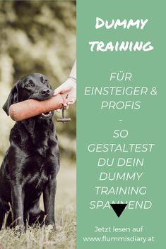 Dummytraining eine Anleitung für dich und deinen Hund- Für Anfänger und Fortgeschrittene geeignet. Apportieren für jeden Hund. #apportieren #hund #dog #dummy #dummytraining #sport #auslastung #hundesport #jagen #jagdhund #anleitung #stepbystep Dog Hacks, Rottweiler, Pet Care, Pets, Guinea, Doggies, Doodle, Joy, Dog Accessories