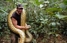 RetaFinal.blogspost.com: Homem será engolido vivo por anaconda em programa ...