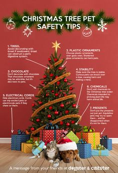 Infographic: Keep Your Pets Safe Around the Christmas Tree | Dogster
